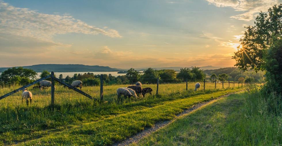 sector-spotlight-farms-uk